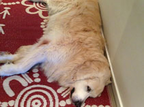 Even doggies love our mats ....